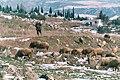 Hierapolis, landscape beyond the excavation site-1.jpg