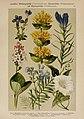 Hoffmann-Dennert botanischer Bilderatlas (Taf. 71) (6425019449).jpg
