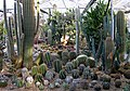 Hollygate Cactus Garden, Ashington, Sussex - geograph.org.uk - 662237.jpg