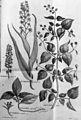 Hornstedt plants.jpg