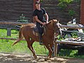 Horse with a rider (6132980100).jpg