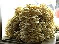 How many mushrooms? (10843370485).jpg