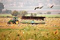 Hula Valley, cranes and visitors.jpg