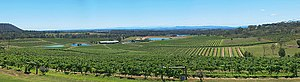 Australian wine - Audrey Wilkinson vineyard in the Hunter Valley.