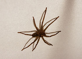 Huntsman inside lampshade.jpg