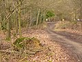 Hurt Wood, Pitch Hill - geograph.org.uk - 1774796.jpg