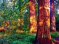 Hyland Woods (formerly Highland Forest Park) 3.jpg