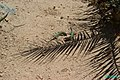 Ibiza - July 2000 - P0000875.JPG