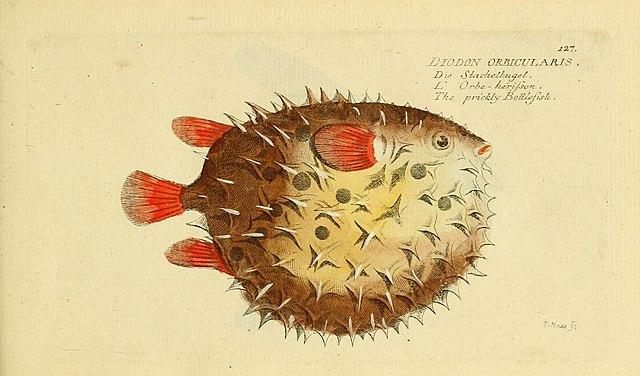 Archivo ichthyologie ou histoire naturelle des poissons for Histoire des jardins wikipedia