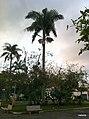 Iguape - SP - panoramio (11).jpg