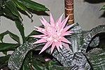 Im Freizeitpark Tropical Islands IMG 8296WI.jpg