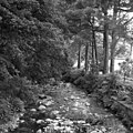 In Glen Auldyn - geograph.org.uk - 562716.jpg