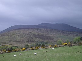 In the Derrynasaggart Mountains, between Killarney and Macroom - geograph.org.uk - 480562.jpg
