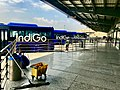 Indigo bus shuttle services in first terminal of Delhi airport 1.jpg