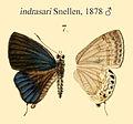 IndrasariSnellen1878.JPG
