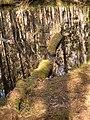 Ingobokällornas naturreservat 03.jpg