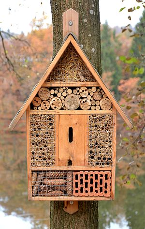 Insect hotel, Tittling.jpg