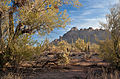 Ironwood Forest NM 2.jpg