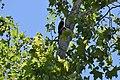 Irvine Regional Park (51156853464).jpg