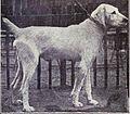 Italian Griffon from 1915.JPG