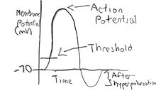 Picture of a action potential that I drew.