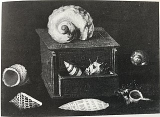 Collection of Shells with their Box