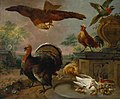 Jan Griffier I (c.1652-1718) - A Turkey and other Fowl in a Park - T04129 - Tate.jpg