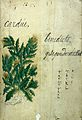 Japanese Herbal, 17th century Wellcome L0030055.jpg