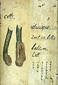 Japanese Herbal, 17th century Wellcome L0030062.jpg
