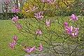 Japanse Tuin Hasselt - 06.jpg