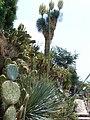 Jardin Exotique - panoramio (1).jpg