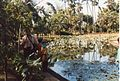 Jardin de Pamplemousses (3004476647).jpg