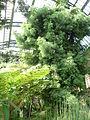 Jardin des plantes Paris Serre de l'histoire des plantes5.JPG