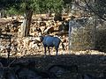 Jerusalem Biblical Zoo042.jpg