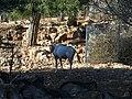 Jerusalem Biblical Zoo042.jpg