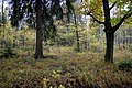 Jesień w lesie - panoramio.jpg