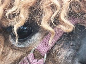 Jesmond Dene Pet Alpacas 1125.JPG