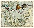 Johannes Hevelius - Hydra.jpg