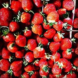 jordgubbar olika sorter