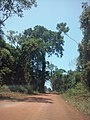 Juara - State of Mato Grosso, Brazil - panoramio - LUIS BELO (6).jpg