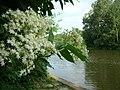 KALISZ majowe obrazki 301 - panoramio.jpg