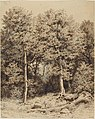 Karl Theodor Reiffenstein, A Copse of Trees, 1863, NGA 127218.jpg