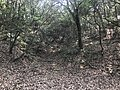 Kasuya Research Forest of Kyushu University 11.jpg