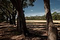 Katoomba Airfield runway and trees.jpg