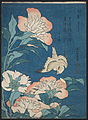 Katsushika Hokusai, published by Nishimuraya Yohachi (Eijudō) - Peonies and Canary (Shakuyaku, kanaari), from an untitled series known as Small Flowers - Google Art Project.jpg
