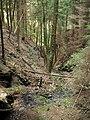 Kavinský potok (3).jpg