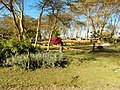 Kenya 2013. At the Lake Naivasha. - panoramio (21).jpg