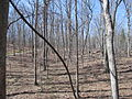 Kings Mountain National Military Park - South Carolina (8558892774) (2).jpg