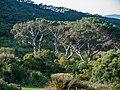 Kirstenbosch National Botanical Garden, Cape Town (P1060060).jpg