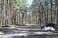 Kleistu mežs, Rīga, Latvia - panoramio (2).jpg